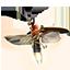 Torchbug Thorax